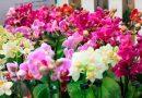 Evento pretende estimular o cultivo de orquídeas em Prado