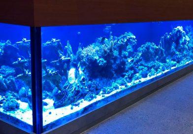 Pousada Casa de Maria exibe maior aquário marinho da rede de hotelaria baiana
